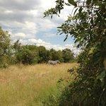 zebra next to my tent