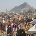 camel Safari Pushkar fair