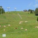 Ski slopes during the Winter, grassland during the Summer