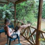 un deck sobre el rio shiripuno