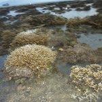 кораллы при отливе