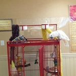 Sabrina the resident bird at the Ramada Nags Head