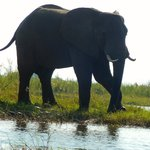 One of the first elephants we saw on our canoe trip!