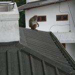 Een aap op het dak, vanaf het balkon gezien..!!