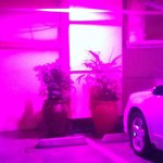 Weird pink lights (and more plants) in the parking garage