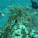 Photo de Baruna Dive Center Tulamben