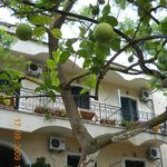 Ionian Marie Hotel