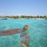 View of Akumal Beach from the water, turtle watching snorkeling spot.