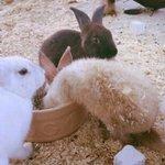 bunny's