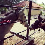 Love at first sight. We finally found a mate for the Donkey; Pos. A new member♡