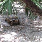 Cutest Tortoise