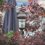 Charming light with a red maple (?) decoration