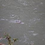 Foto de Ripples on the Creek