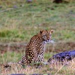 We were lucky enough to see a leopard!