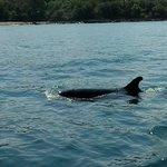 orca falsa