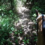 Horseback riding through the jungle