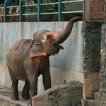 elephant coming!