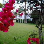 Pretty flowers around the hotel grounds