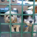 Digby and Casper waiting at the gate