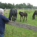 Checking out the Friesian colt