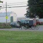 Amish hestevoge