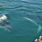 Encounter with wild dolphins