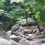 Electric Brook Gorge