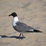 Bird on the sand
