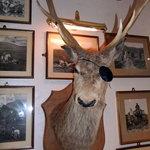 one-eyed deer