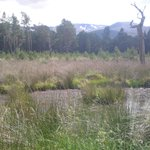Mountains and Marsh . Aviemore cycletrack 2013