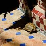 Riad Tortoise