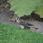 Bird life at hotel