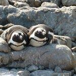Penguins sunbathing
