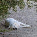 the hotel dog