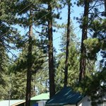 cottage 1 in the pines