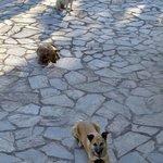 3 liebenswerte und sehr zutrauliche Hunde (gehören mit zur Anlage)