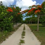 Road to Shanna's Cove / my running trail
