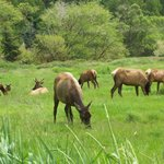 Davison Road Elk Herd; 1 hour south of Requa Inn.