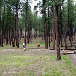 A broad view of our campsite in the Upper Loop at Center Lake Campground