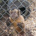 Monkey pretending to be sad