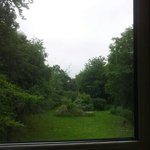 View of the garden from room