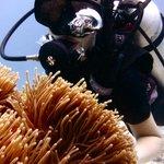 Photo de U2 Divers
