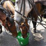 Horses visit Black Bull for a drink