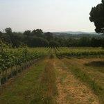 Stopham Estate vineyard 1