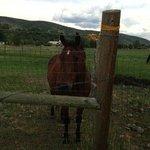 Friendly horse next door