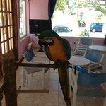 Peters Parrot