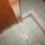 Bathroom roach kill