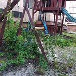 Playground equipment overrun with weeds
