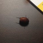 Bugs in our hotel room. Please be aware!