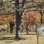 Hedges Boyer Park gives you lovely tree lined trails to walk to run on...